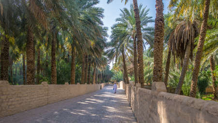 Lonely walker on a misty morning in Al Ain Oasis, United Arab Emirates 写真素材
