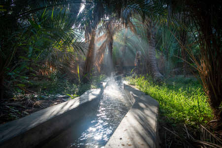 Irrigation channel with sunbeam on a misty morning in Al Ain Oasis, United Arab Emirates