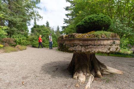 Strange sculpture supporting a bonsai, Metis-sur-mer, Quebec, Canada