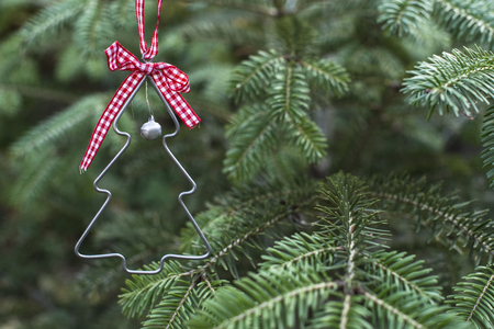 Christmas tree shape on real pine tree. Christmas tree miniature shape on branch.