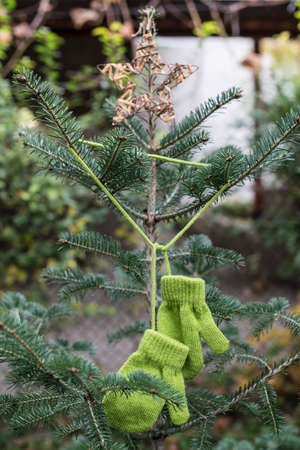 Zimní zelené rukavice na jedle Reklamní fotografie