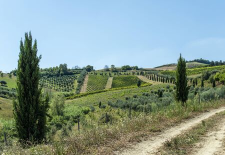 Roads, hills and agricultural land in Italy. Landscape with cypresses and vineyards. Sunny day.