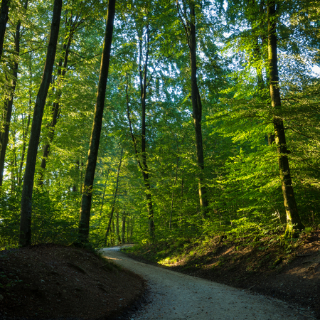 Winding trail through a sunlit forest with leafy green trees in a square format landscape or nature background