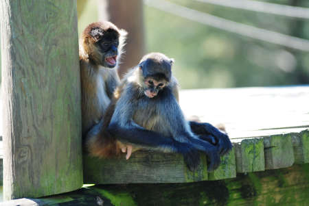 forlorn: Mother monkey and