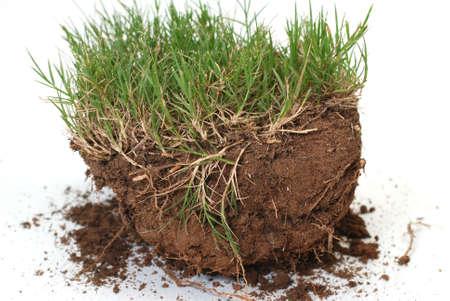 草や汚れは、白い背景で隔離のプラグ。 写真素材