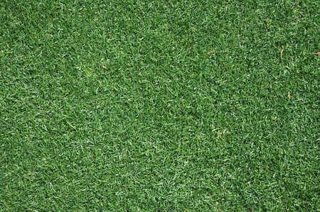 背景の緑豊かな緑の芝生のクローズ アップ。