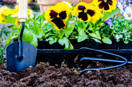 Planting flowers closeup   Closeup of daisies, violas, trowel, cultivator, and pots on cultivated soil  写真素材