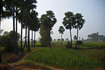 bodhgaya: Bodhgaya Landscape