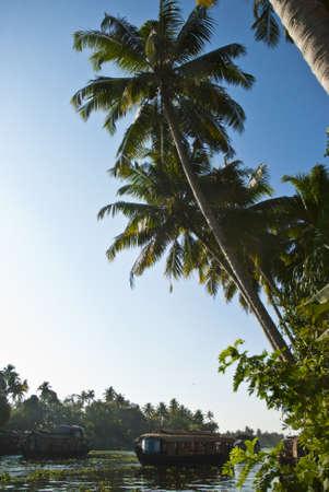 backwaters: Backwaters Allapey