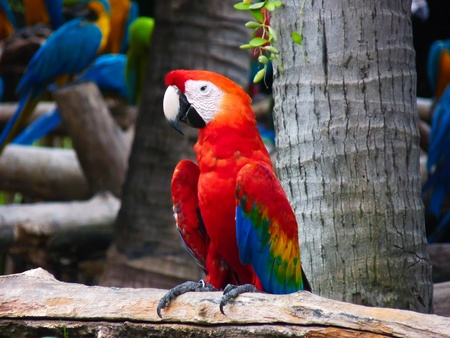 Beautiful Macaw Parrot photo