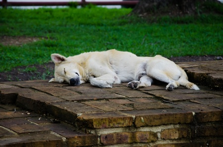desertion: Sleeping Vagrant Dog in Thailand Stock Photo