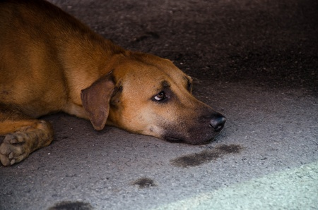Lonely and Fear - Vagrant Dog in Thailand Stock Photo - 13288428