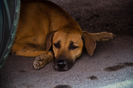 Lonely and Fear Forlorn Dog in Thailand Stock Photo - 13288422