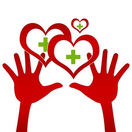 donacion de organos: Gr�fico para el presente Concepto Coraz�n donaci�n de dos manos que sostienen el coraz�n rojo con la cruz verde dentro aisladas sobre fondo blanco