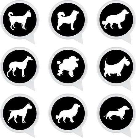 spitz: Set Of White Dog on Black Icons Isolated on White Background