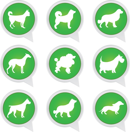 golden retriever puppy: Set Of White Dog on Green Icons Isolated on White Background