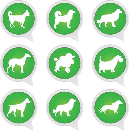spitz: Set Of White Dog on Green Icons Isolated on White Background