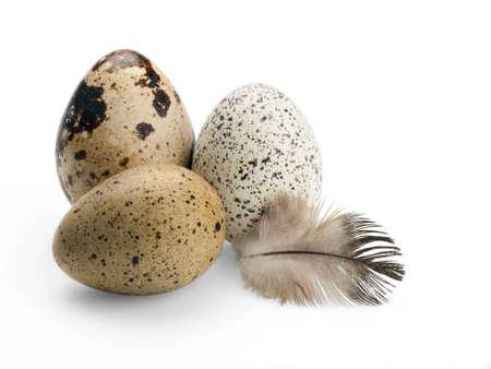 Drei Wachteleier und Vogelfeder Standard-Bild