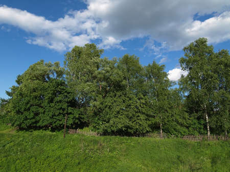 lopsided: The lop-sided wooden fence under the big trees