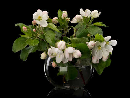 Bouquet from flowers of an apple-tree in glass vase it is isolated on the black