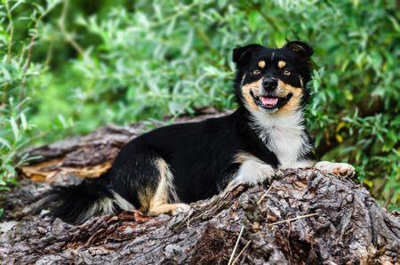 A happy dog lies on a fallen tree in nature. Foto de archivo - 133533188