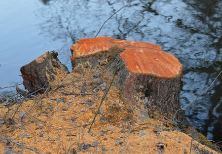 cutted: Cutted tree stub near to the river bank Stock Photo