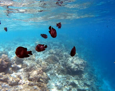Tropical Coral Reef Fishes of Indian Ocean Stock Photo