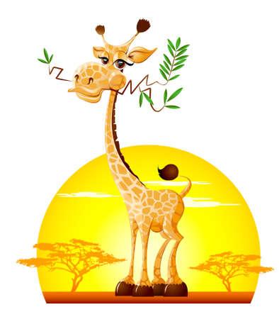 herbivorous animals: Giraffe