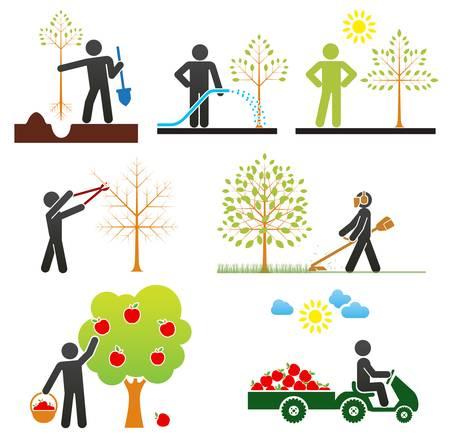 Pictogrammes représentant les personnes qui prennent soin d'arbres fruitiers