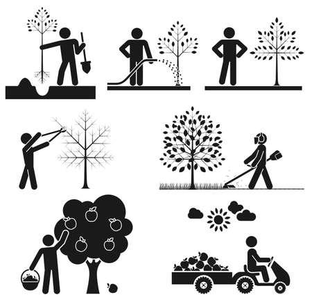 果物の木の世話をして人々 を表すピクトグラム  イラスト・ベクター素材