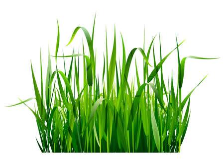 白の背景に分離された緑の新鮮な草  イラスト・ベクター素材