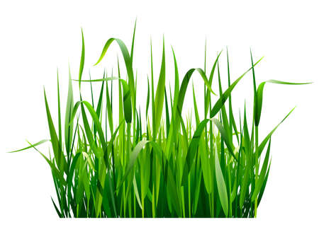 closeup: Green fresh grass isolated on white background
