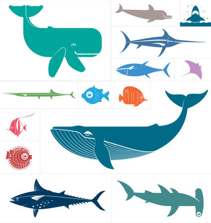 tuna fish: Vector set which represent various sea animals   Illustration