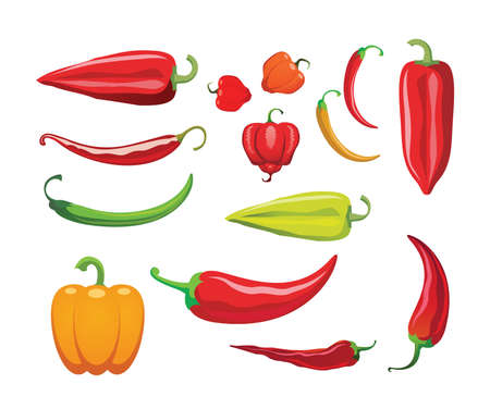 Different sorts of hot peppers in all colors, shapes and sizes. Chili. Vector illustration. Ilustracja