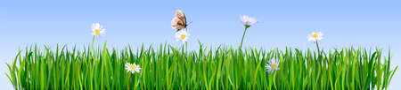 Green grass borders. Meadow flowers and butterfly. Green fresh grass background.