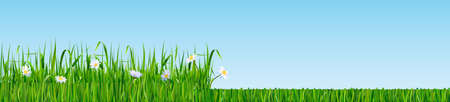 Mowed and non cultivated natural grass. High green fresh grass with meadow flowers and mowed grass. Lawn maintaining. Vector illustration.