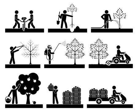 Food production. Pictogram icon set presenting different stages in fruit growing process. Icon set presenting orcharding, plowing, sowing, watering, picking, spraying fruit and transporting.