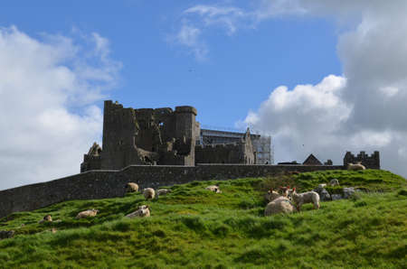 irish countryside: Sheep grazing on the hill at the Rock of Cashel in Ireland.