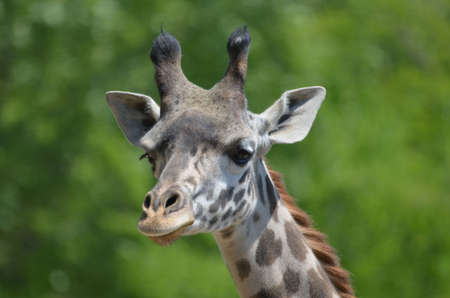 Giraffe with a terrific pattern on his coat.