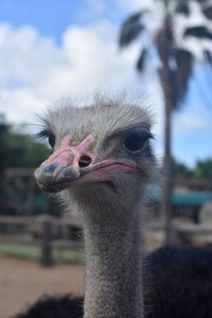 Looking up the beak into the face of an ostrich.