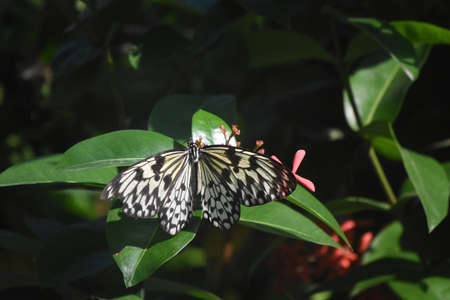 Garden with a stunning white and black butterfly.
