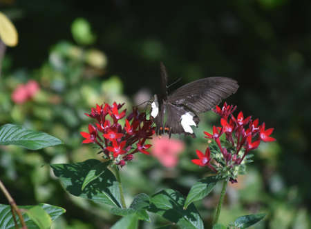 Garden with a flittering black and white butterfly.