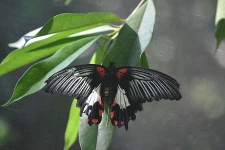 Wings spread wide open on a butterfly in a garden.