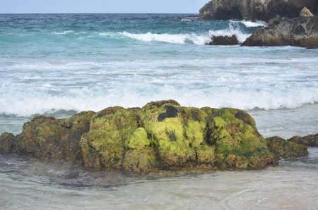 Green algae growing on a rock formation on a beach called Boca Keto.