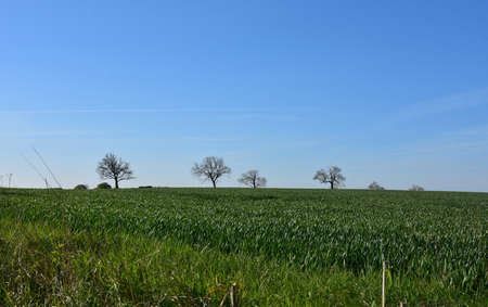 Occasional trees dotting the landscape between large green fields. Stock fotó
