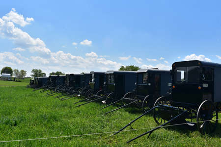 Bunch of parked horse drawn buggies parked in a field in Lancaster County.