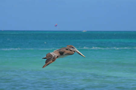 Blue skies and tropical waters with a pelican in flight.