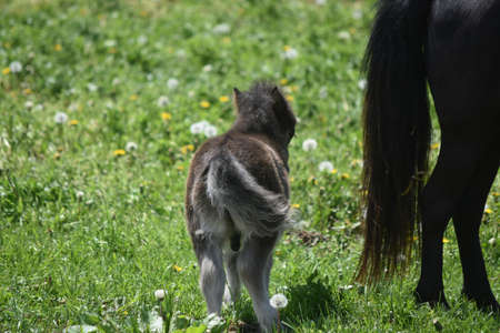 Absolutely adorable backside of a colt in a field. 免版税图像