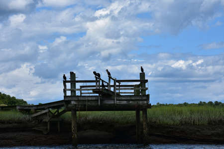 Beautiful scenic view of a dock with birds adn a marsh. Foto de archivo