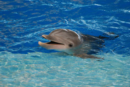 Cute dolphin with a big grin on his face. Standard-Bild